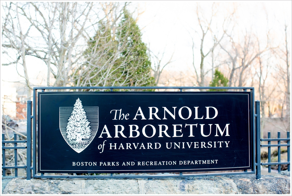 Arnold Aboretum Photography