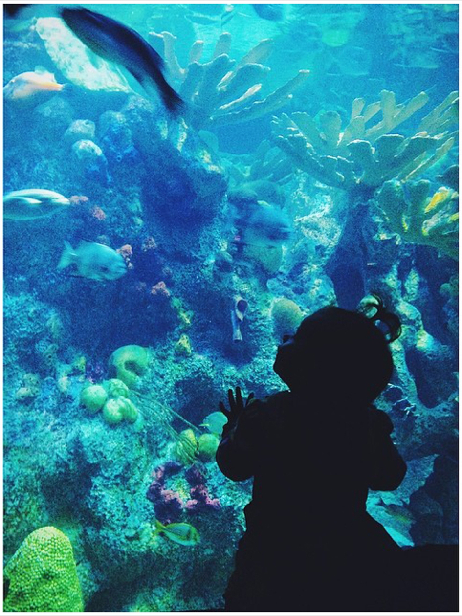 New england aquarium New england aquarium tickets