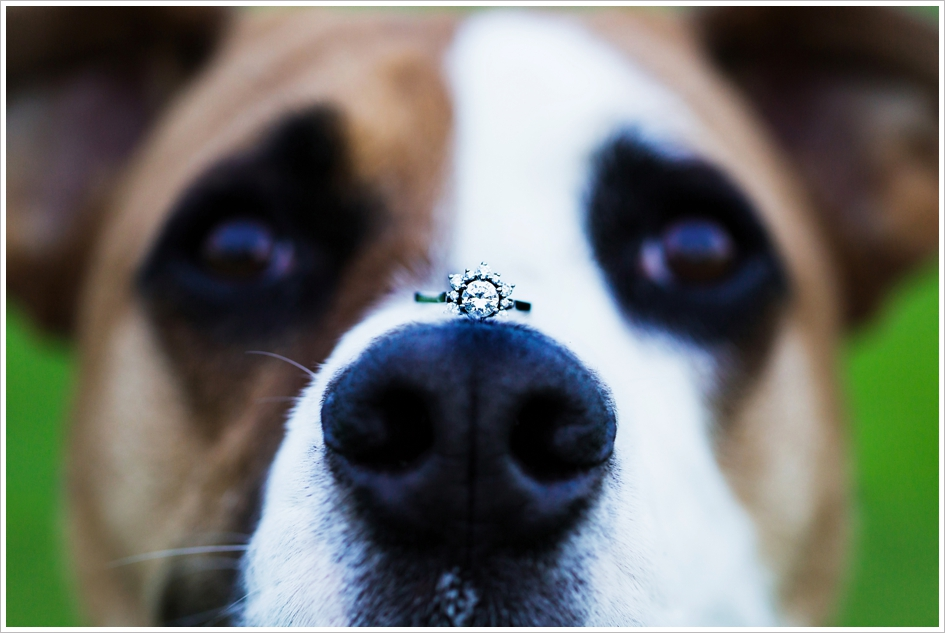 Pet Engagement Photography